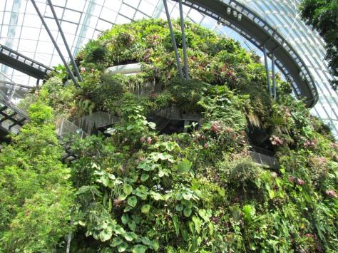 cloudforest2