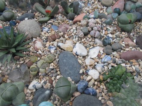 stoneplants