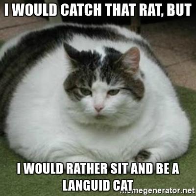 languidcat.jpg